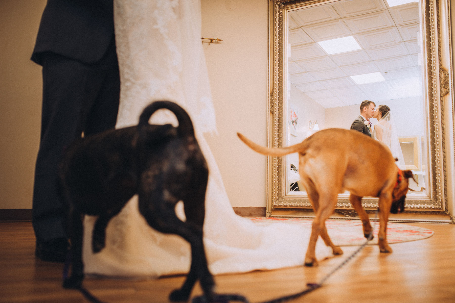 Bride and groom kiss with their pet dogs at their feet.