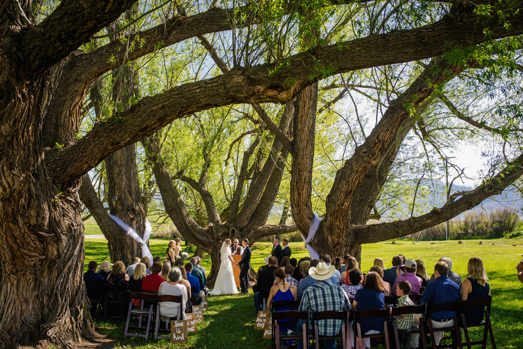 Wedding ceremony underneath Willow trees at Willow Vale Events.