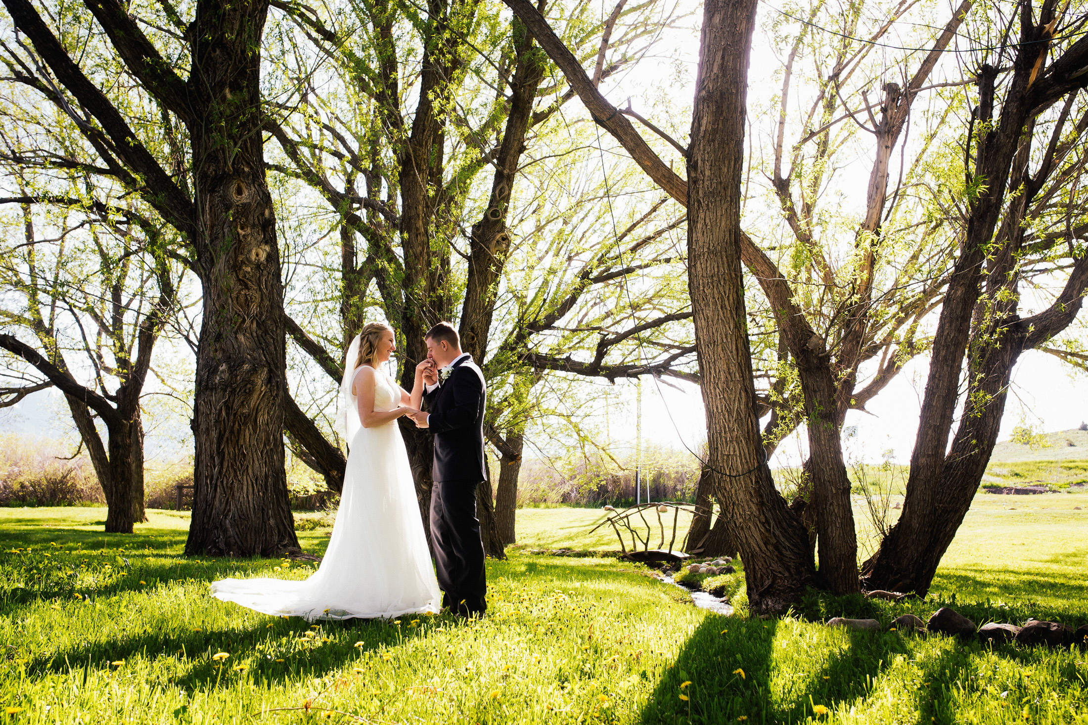 Groom kisses bride's hand underneath Willow trees.