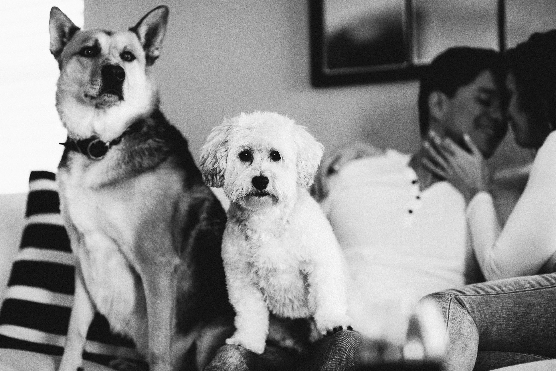 Black and white photo of two dogs sitting on the couch next to their owners.